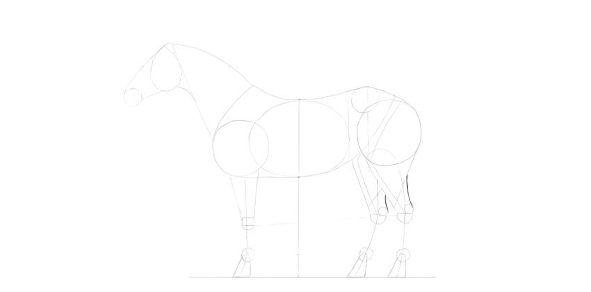 horse drawing achilles tendon