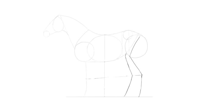 horse drawing hindlegs