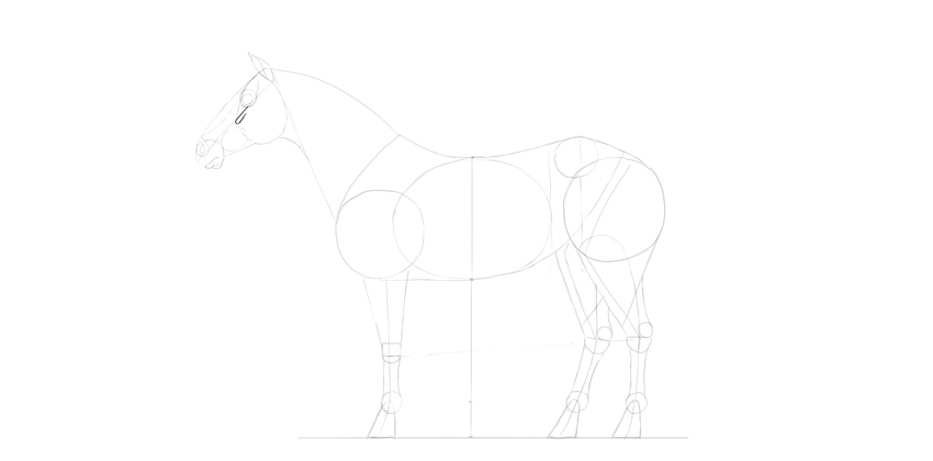 horse drawing cheek bones