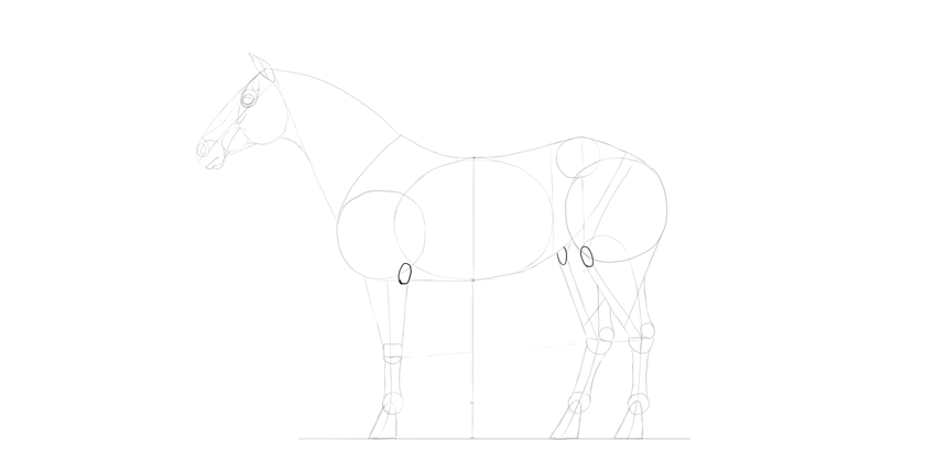 horse drawing knees elbows
