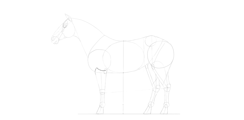 horse drawing arm muscles