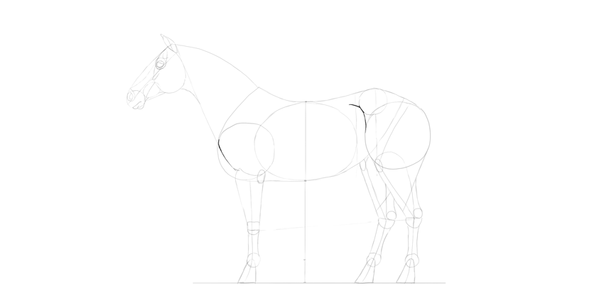 horse drawing thigh detail