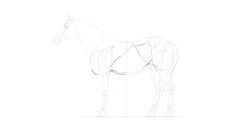 horse drawing torso muscles