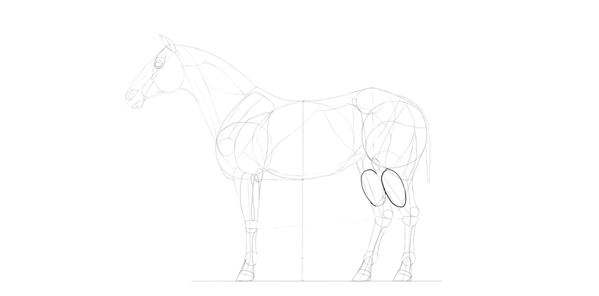 horse drawing calf muscles