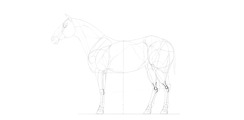 horse drawing bony joints