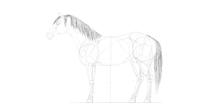 horse drawing mane tail shading