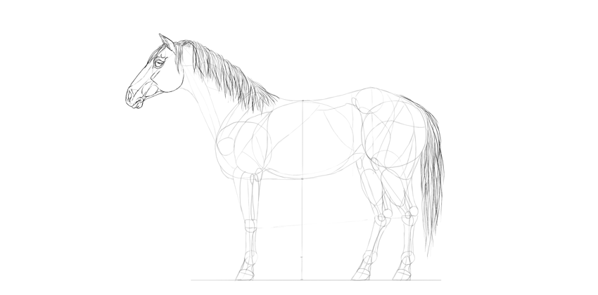 horse drawing face details