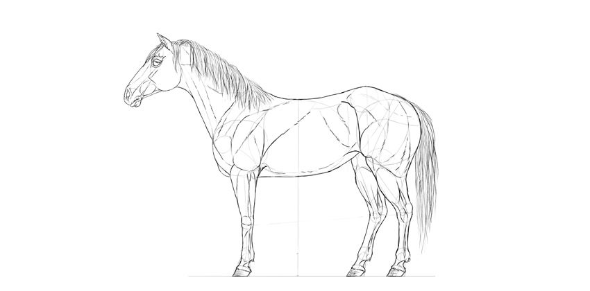 horse drawing body details