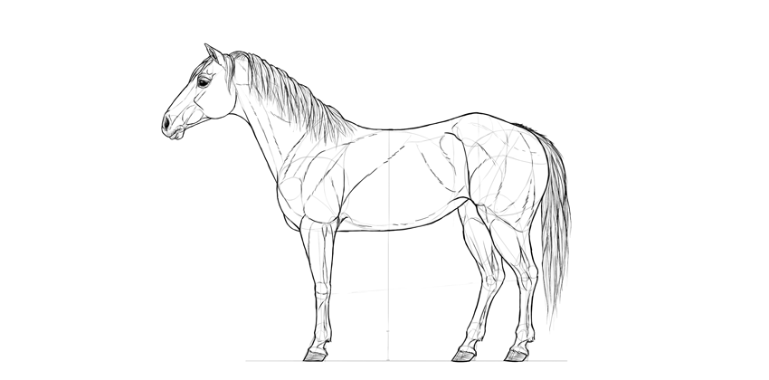 horse drawing main outline
