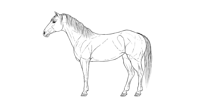 how to draw horse step by step