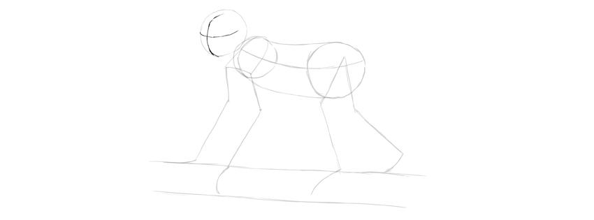 monkey drawing head direction