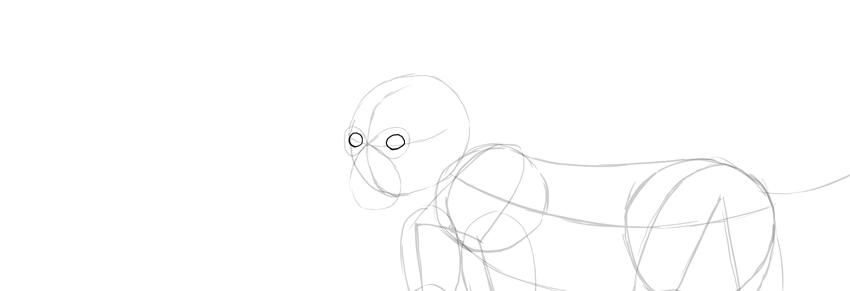monkey drawing eyes shape