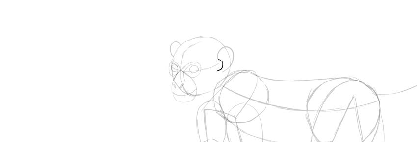 monkey drawing ears detail
