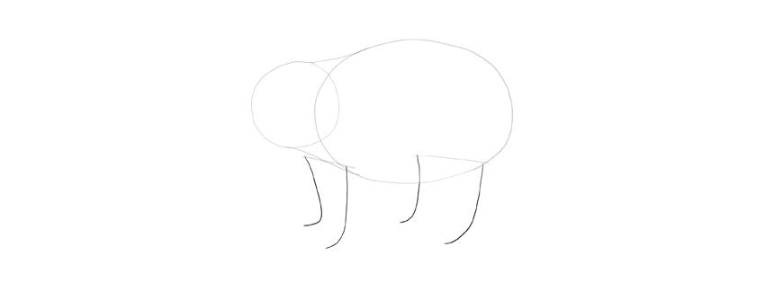 panda drawing legs length