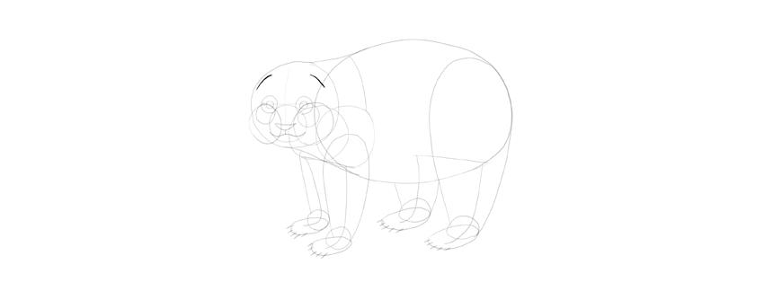 panda drawing ears place