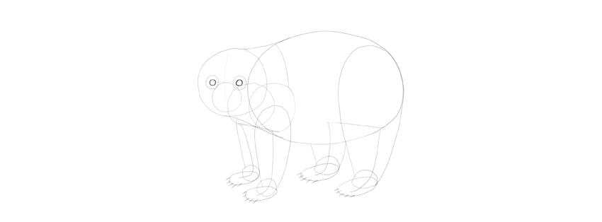 panda drawing eyes shape