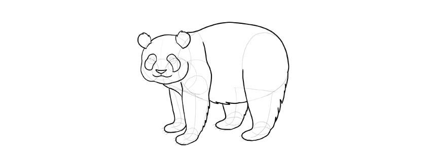 panda drawing fluffy body