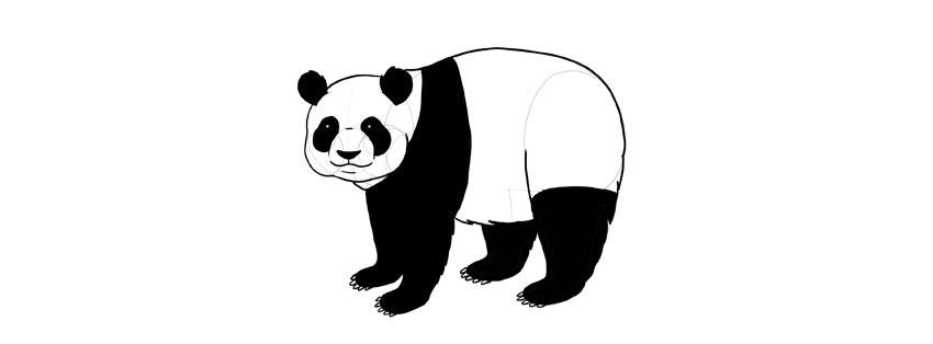 panda drawing black and white