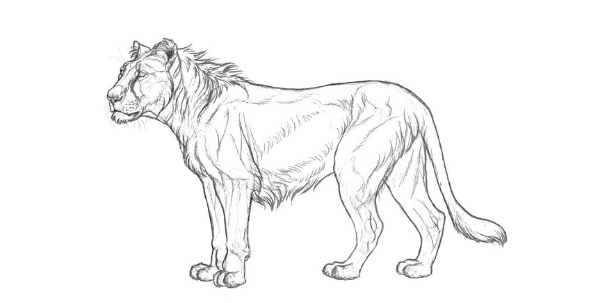 adjusted black and white illustration
