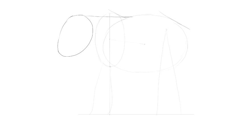 elephant head shape