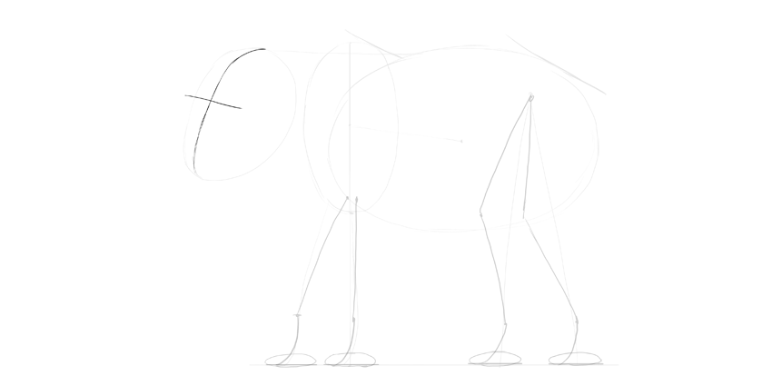 elephant face direction