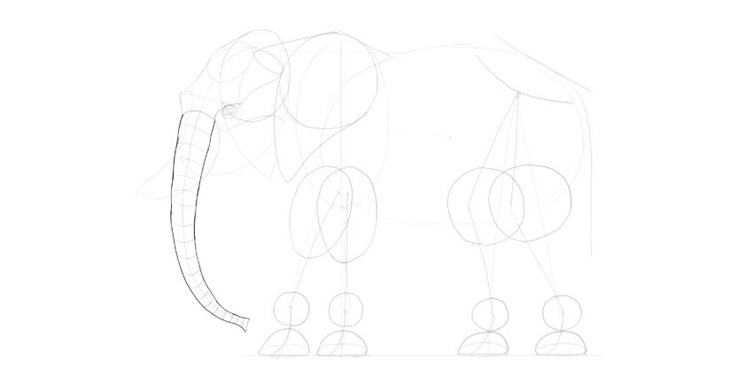 elephant trunk outline