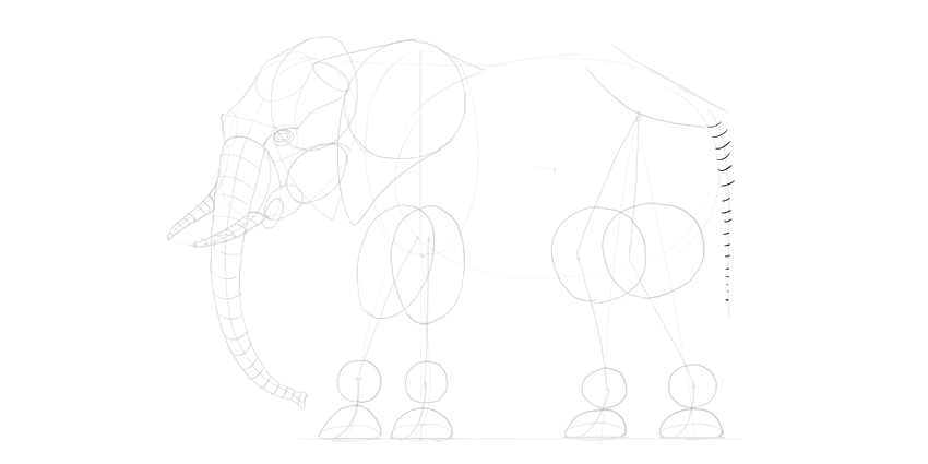 elephant tail sketch