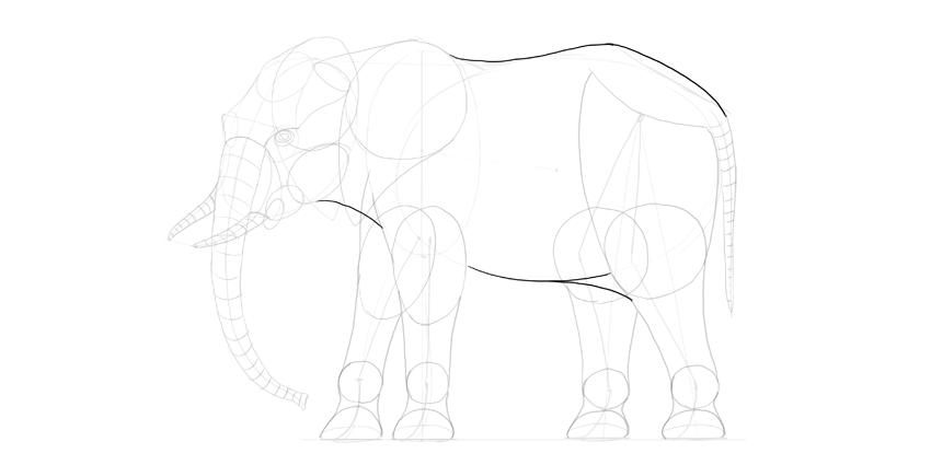 elephant body outline