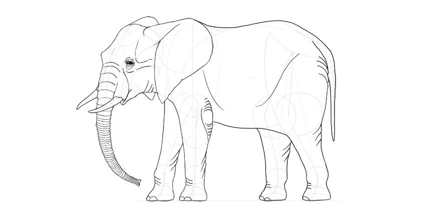 elephant full body