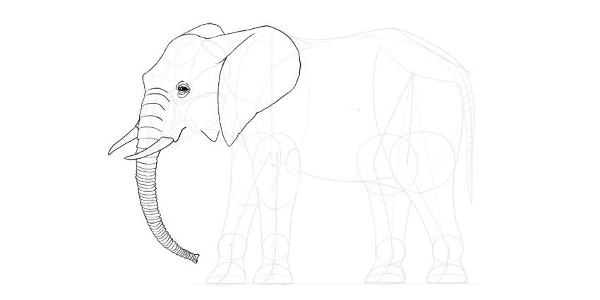 elephant face details