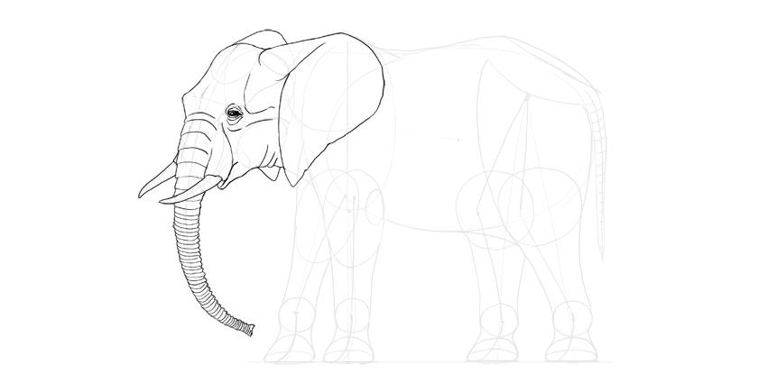 elephant mouth details