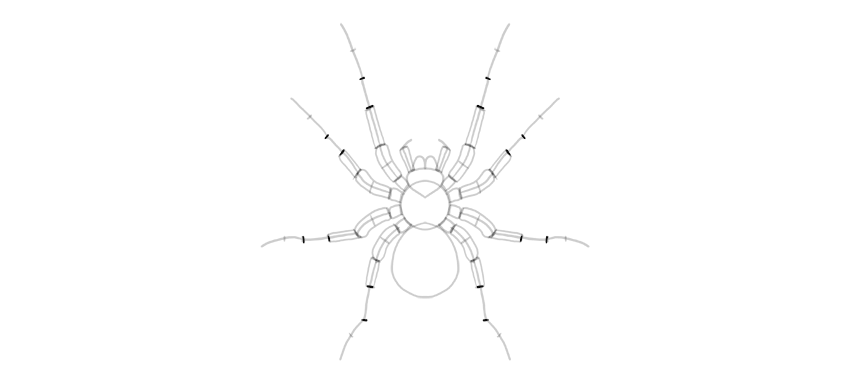 spider drawing leg segment