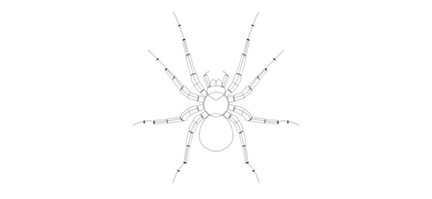 spider drawing spider legs