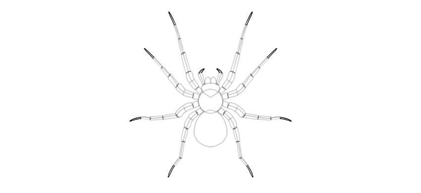 spider drawing leg tip
