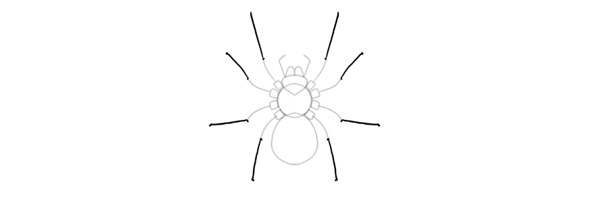 spider drawing middle part of leg