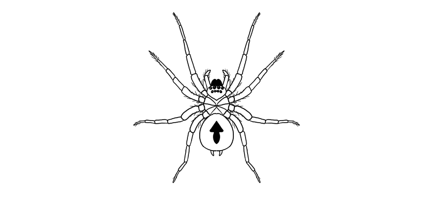 how to draw a spider step by step