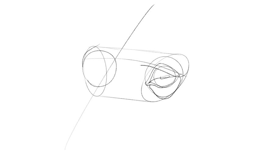 horse lower eyelid shape drawing