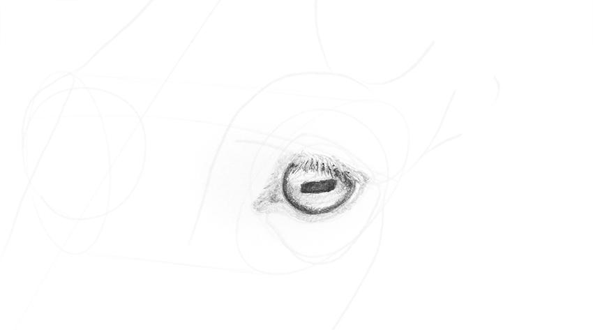 horse eye dark pupil