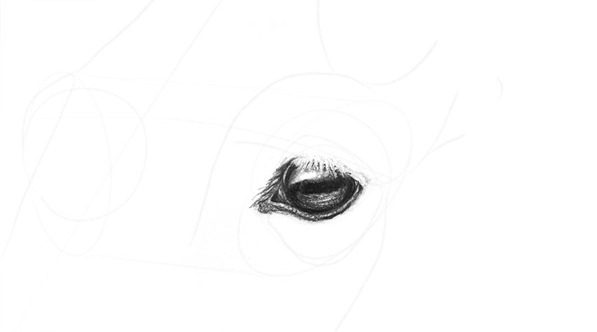 horse eyelid rims shading