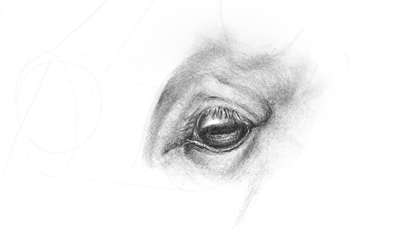 horse eye blending shading