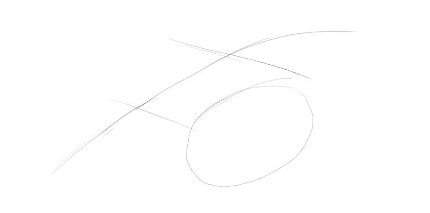 lizard eye socket drawing