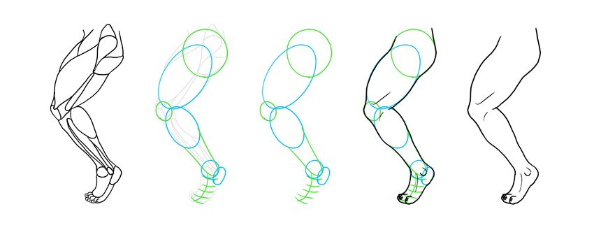 how to simplify anatomy