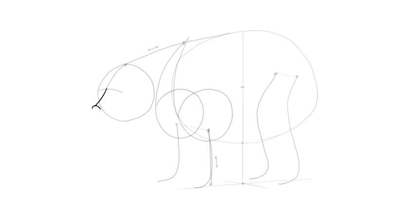 bear drawing nose line