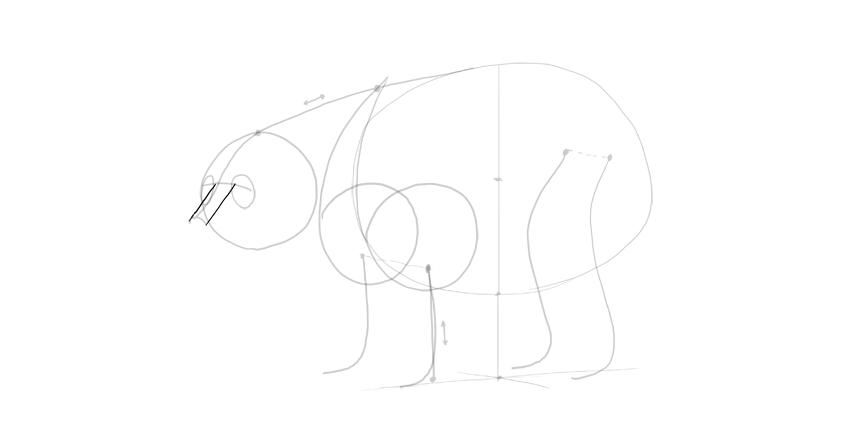 bear drawing nose bridge