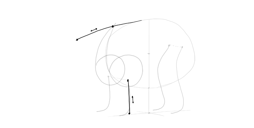 bear drawing neck proportion