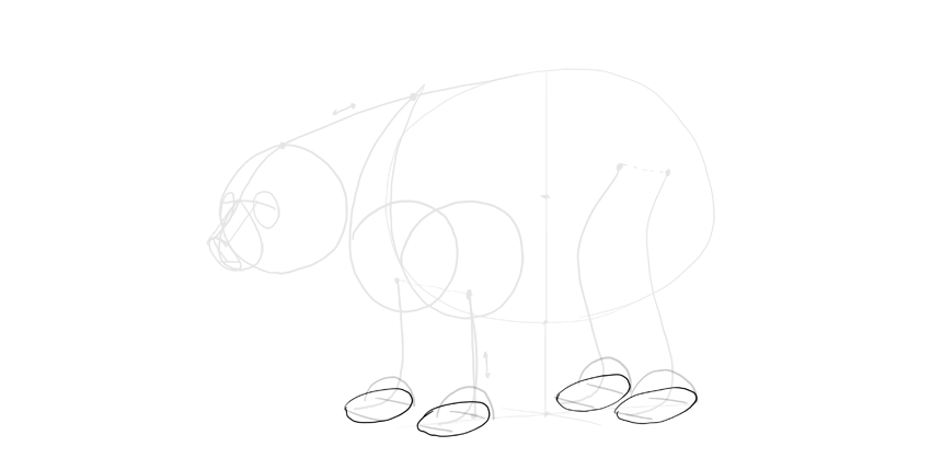 bear drawing paws outline