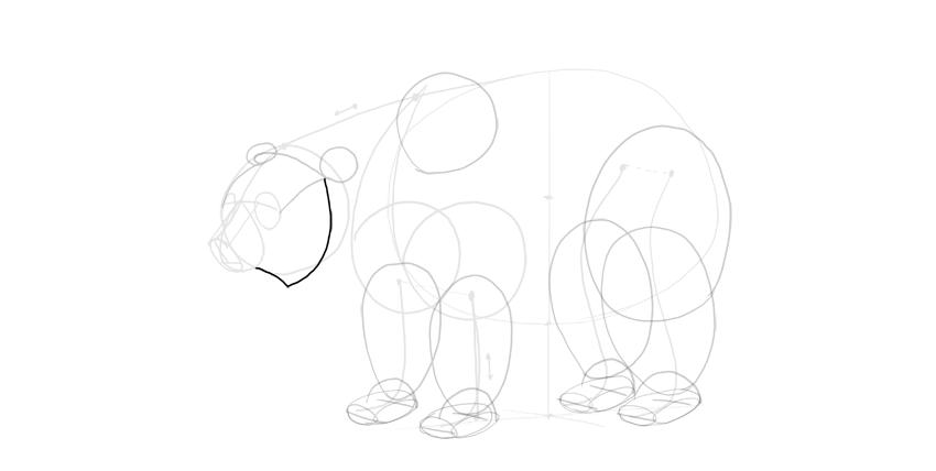 bear drawing cheek mane