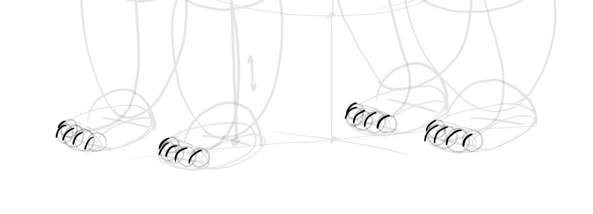 bear drawing claw curves