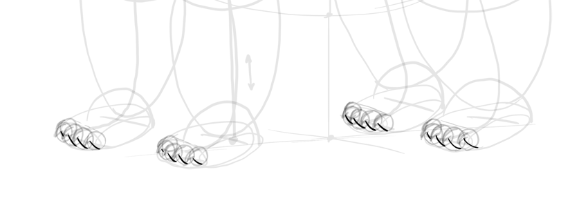 bear drawing paw pads