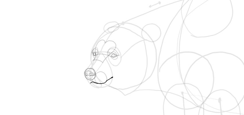 bear drawing mouth